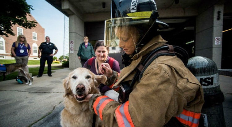 Golden Retriever sitting with a firefighter who is wearing all gear, to give her support