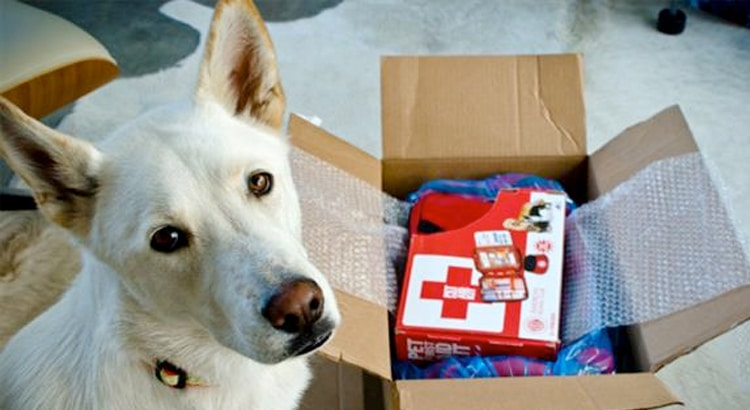 White dog laying on the floor and looking up over a box if disaster supplies and first aid kit