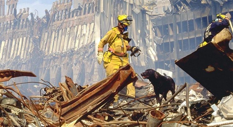 Firefighter in yellow gear at ground zero of the World Trade Centers in New York City after the bombing in 2001, with a black lab by his side