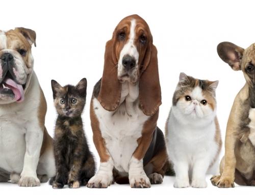 Introducing Pin Paws Plus: A Bundled Pet Health Membership
