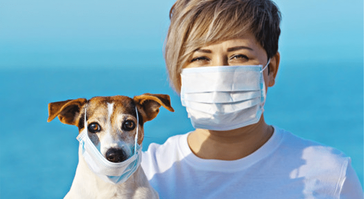 woman with short brown hair and a brown and white terrier dog wearing surgical masks